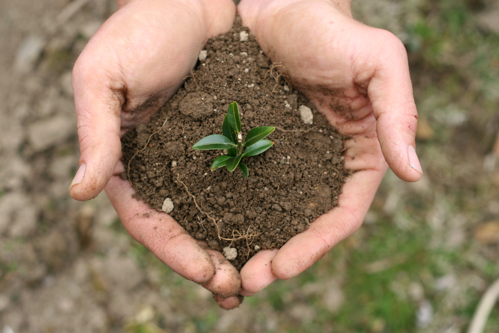 mineral nutrients in soil that plants need pure nutrients