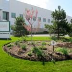 northern-illinois-food-bank-growing-food-security-garden
