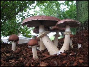 Permaculture Plants - Fungi @ The Resiliency Institute | Naperville | Illinois | United States