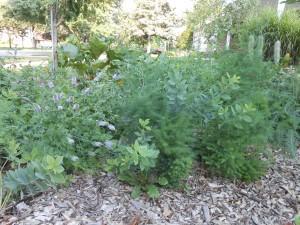 asparagus, wild blue indigo, grapefruit mint, purple prairie clover