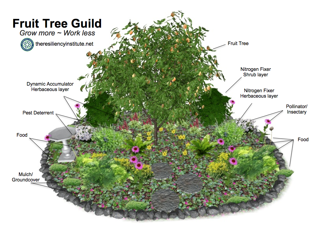 A Plum Tree Guild