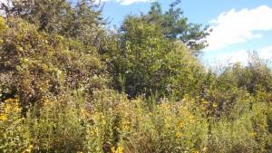 McDowell shrub layer