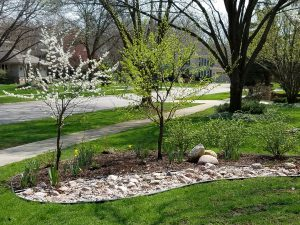 Suburban Permaculture Garden Walk - Trendler @ Trendier Residence | Naperville | Illinois | United States
