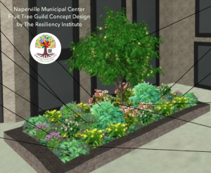 Arbor Day - Plant a Fruit Tree Guild @ Naperville Municipal Center | Naperville | Illinois | United States