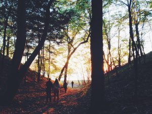 shinrin-yoku-forest-bathing-naperville