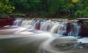 Forest Therapy Tuesdays @ Waterfall Glen | Willowbrook | Illinois | United States
