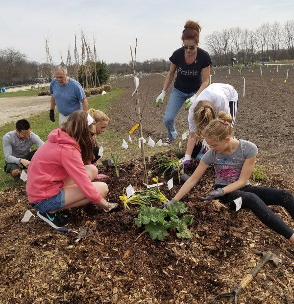 Volunteer forest gardens