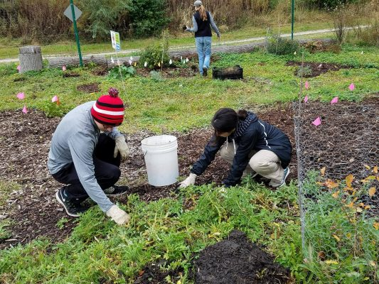 Work & Learn @ Ferry Forest Garden!