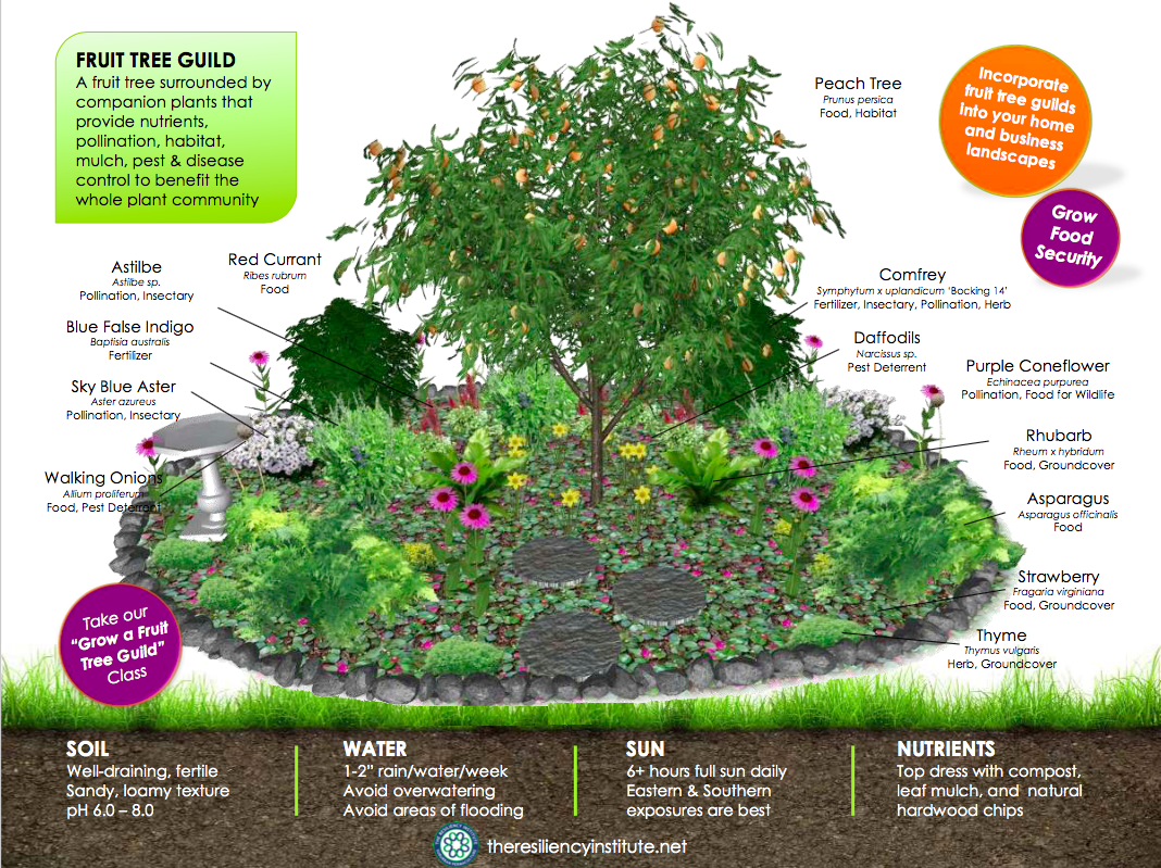 Fruit Tree Guild Work & Learn - The Resiliency Institute