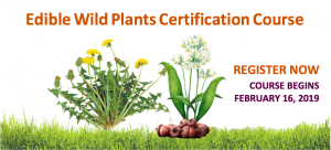 Edible Wild Plants Certificate Course 2019 @ The Resiliency Institute | Naperville | Illinois | United States