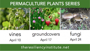 Permaculture Plants - Vines, Groundcovers, Fungi @ The Resiliency Institute | Naperville | Illinois | United States