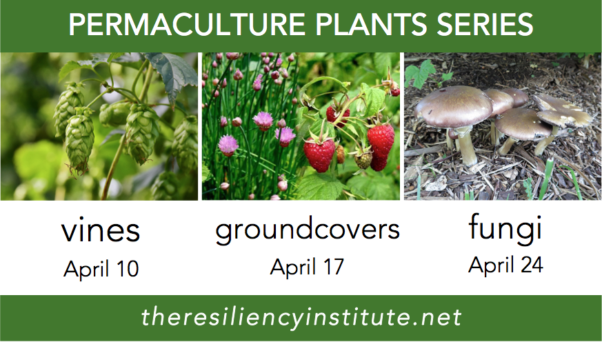 Permaculture-plant-series-april-vines-groundcovers-fungi