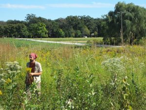 Fourth Friday Foraging @ The Resiliency Institute | Naperville | Illinois | United States